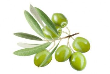 Colore Verde Olivo