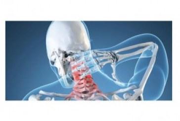 I legamenti e i muscoli