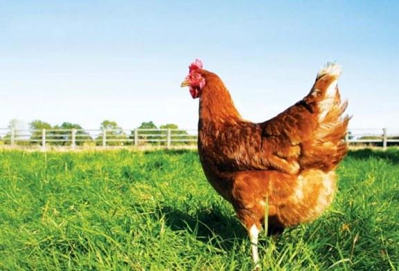 Uovo, meno colesterolo più vitamina D