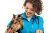 Curare la paura negli animali