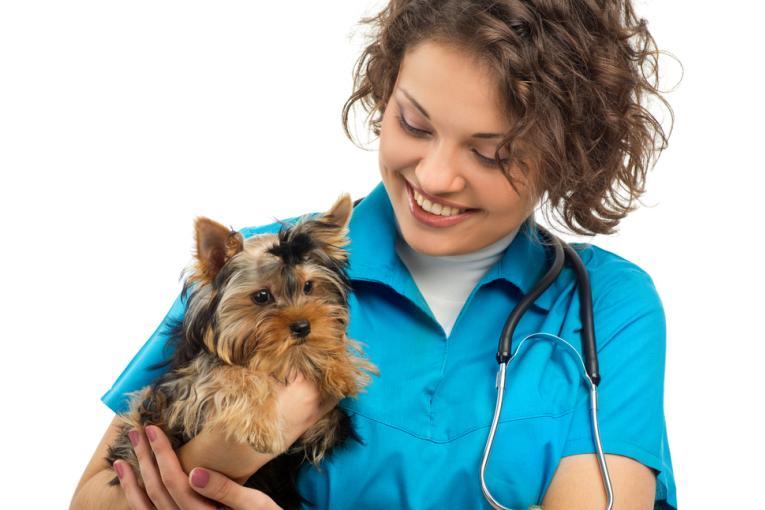 Curare gli Animali