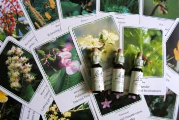 Floriterapia e fiori di Bach