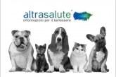 Curare la testardaggine negli animali