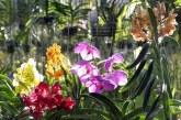 Orchidea della Vita Passata