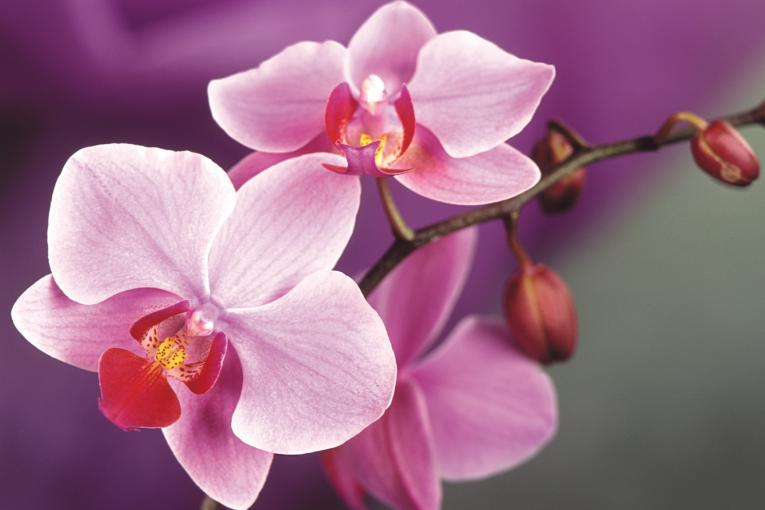 Orchidee_04