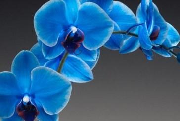 Colore Azzurro Ortensia
