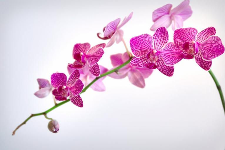 orchidee e sole