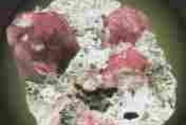Granato rosso
