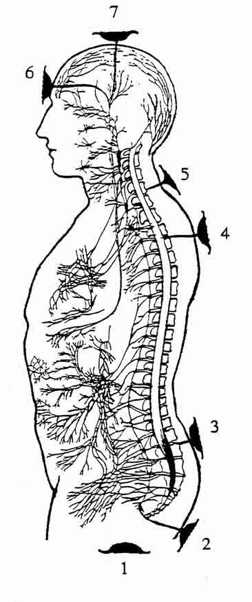 IRECA i chakra nel corpo umano