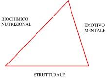 kinesiologia triangolo 1